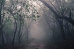 Δάσος της Misty του σταθμού Hill Matheran Στοκ Φωτογραφίες
