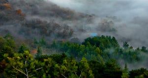 Δάσος της Misty φυσικό Στοκ Εικόνες