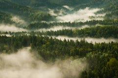 Δάσος της Misty Στοκ φωτογραφία με δικαίωμα ελεύθερης χρήσης