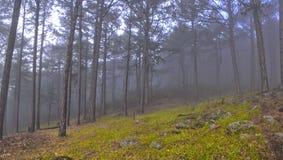 Δάσος της Misty Στοκ Φωτογραφία