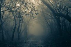 Δάσος της Misty Matheran Στοκ φωτογραφία με δικαίωμα ελεύθερης χρήσης