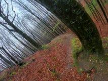 Δάσος τοπίων αγριοτήτων με τα δέντρα και βρύο στους βράχους στοκ εικόνα με δικαίωμα ελεύθερης χρήσης