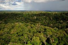 Δάσος του Αμαζονίου στοκ φωτογραφίες