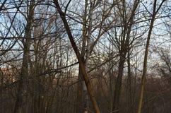 Δάσος του φτερωτού γιατρού στοκ εικόνες