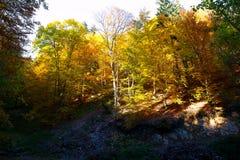Δάσος το φθινόπωρο, όμορφο φθινόπωρο χρώματος foresr Στοκ Εικόνα