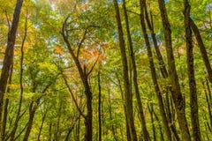 Δάσος το φθινόπωρο Στοκ εικόνα με δικαίωμα ελεύθερης χρήσης