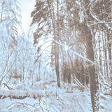Δάσος το χειμώνα Στοκ φωτογραφία με δικαίωμα ελεύθερης χρήσης