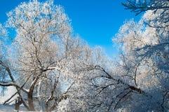 Δάσος το χειμώνα στοκ φωτογραφία