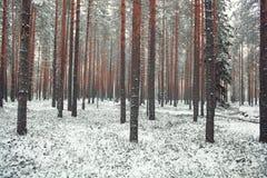 Δάσος το χειμώνα Στοκ εικόνα με δικαίωμα ελεύθερης χρήσης