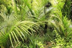 δάσος τροπικό Στοκ εικόνα με δικαίωμα ελεύθερης χρήσης