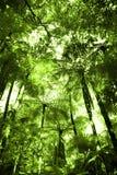 δάσος τροπικό Στοκ Εικόνα