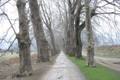 Δάσος τρόπων Στοκ εικόνα με δικαίωμα ελεύθερης χρήσης