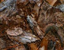 δάσος τσιπ στοκ εικόνα