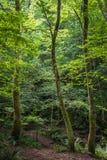 Δάσος των αστουριών Στοκ Εικόνες
