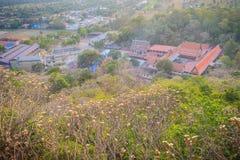 Δάσος των δέντρων λουλουδιών Plumeria στο βουνό στη ζώνη Wat Khao Στοκ φωτογραφία με δικαίωμα ελεύθερης χρήσης