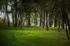Δάσος υπολοίπου Στοκ φωτογραφίες με δικαίωμα ελεύθερης χρήσης