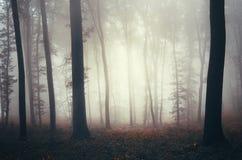 Δάσος φαντασίας με την παχιά ομίχλη Στοκ Εικόνα
