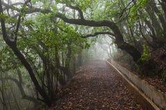 Δάσος φαντασίας, νησί της Μαδέρας στοκ φωτογραφία