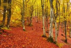Δάσος φαντασίας της Νίκαιας τοπίων με τον κολπίσκο ένα χρυσό φθινόπωρο Στοκ εικόνες με δικαίωμα ελεύθερης χρήσης