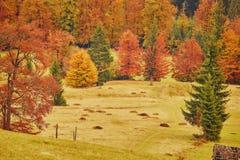 Δάσος φαντασίας της Νίκαιας τοπίων με τον κολπίσκο ένα χρυσό φθινόπωρο Στοκ φωτογραφία με δικαίωμα ελεύθερης χρήσης