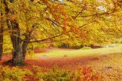 Δάσος φαντασίας της Νίκαιας τοπίων με τον κολπίσκο ένα χρυσό φθινόπωρο Στοκ Φωτογραφίες