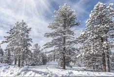 Δάσος φαραγγιών του Bryce Στοκ Εικόνα