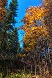 Δάσος φθινοπώρου, λιβάδι, κίτρινα φύλλα Στοκ φωτογραφία με δικαίωμα ελεύθερης χρήσης