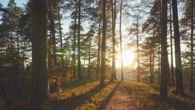 Δάσος φθινοπώρου και ήλιος, τηγάνι φιλμ μικρού μήκους