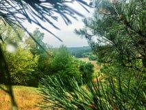 Δάσος φθινοπώρου μετά από τη βροχή Στοκ εικόνα με δικαίωμα ελεύθερης χρήσης