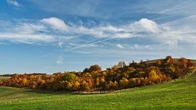 Δάσος φθινοπώρου μεταξύ του λιβαδιού Στοκ εικόνα με δικαίωμα ελεύθερης χρήσης
