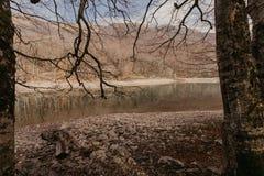 Δάσος φθινοπώρου με την αντανάκλαση στη λίμνη Biogradsko στο Μαυροβούνιο - εικόνα στοκ φωτογραφίες