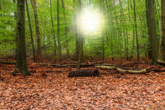 Δάσος φθινοπώρου με την ηλιοφάνεια Στοκ φωτογραφία με δικαίωμα ελεύθερης χρήσης