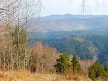 Δάσος φθινοπώρου με τη θέα βουνού Στοκ Εικόνες