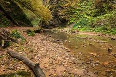 Δάσος φθινοπώρου με τον κολπίσκο Στοκ φωτογραφίες με δικαίωμα ελεύθερης χρήσης