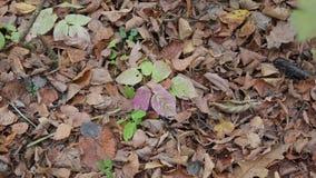 Δάσος φθινοπώρου μια νεφελώδη ημέρα απόθεμα βίντεο