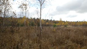 Δάσος φθινοπώρου μια νεφελώδη ημέρα, defoliation απόθεμα βίντεο