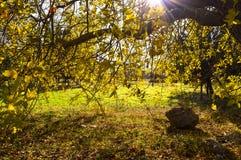Δάσος φθινοπώρου - ο ήλιος λάμπει λαμπρά στο κίτρινο φύλλο Στοκ φωτογραφία με δικαίωμα ελεύθερης χρήσης