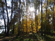 Δάσος φθινοπώρου που θερμαίνεται από τον ήλιο Κιτρινοπράσινο τοπίο στοκ φωτογραφία με δικαίωμα ελεύθερης χρήσης
