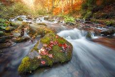 Δάσος φθινοπώρου, ρεύμα βουνών Βράχοι που καλύπτονται με το βρύο Ποταμός Καρπάθιος Στοκ φωτογραφία με δικαίωμα ελεύθερης χρήσης