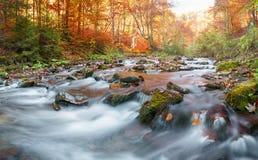 Δάσος φθινοπώρου, ρεύμα βουνών Όμορφος, βράχοι που καλύπτονται με το βρύο ορμητικά σημεία ποταμού και καταρράκτες ποταμών Καρπάθι Στοκ Εικόνες