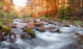 Δάσος φθινοπώρου, ρεύμα βουνών Όμορφος, βράχοι που καλύπτονται με το βρύο ορμητικά σημεία ποταμού και καταρράκτες ποταμών Καρπάθι Στοκ Φωτογραφίες