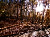 Δάσος φθινοπώρου στην ηλιόλουστη ημέρα, Πολωνία στοκ φωτογραφία με δικαίωμα ελεύθερης χρήσης