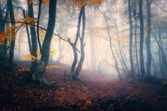 Δάσος φθινοπώρου στην μπλε ομίχλη Μυστικά δέντρα φθινοπώρου με το ίχνος στο μ Στοκ Εικόνα