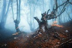 Δάσος φθινοπώρου στην μπλε ομίχλη Μυστικά δέντρα φθινοπώρου Στοκ εικόνες με δικαίωμα ελεύθερης χρήσης