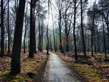 Δάσος φθινοπώρου στην Ολλανδία Στοκ φωτογραφίες με δικαίωμα ελεύθερης χρήσης