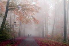 Δάσος φθινοπώρου στην υδρονέφωση Στοκ Φωτογραφία