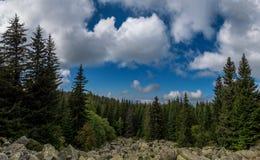 Δάσος φθινοπώρου στη βουνοπλαγιά όμορφη φύση Στοκ φωτογραφία με δικαίωμα ελεύθερης χρήσης