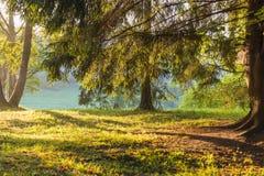 Δάσος φθινοπώρου στον ήλιο Στοκ Εικόνες