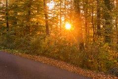 Δάσος φθινοπώρου στο ηλιοβασίλεμα Ελβετία Στοκ Εικόνα