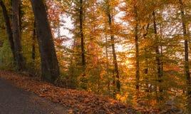 Δάσος φθινοπώρου στο ηλιοβασίλεμα ελβετικά Στοκ Φωτογραφίες